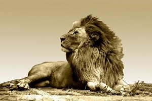 To avoid Christian marriage counseling requires a king of the jungle mentality such as the courage of a lion. Do you possess the perseverance?